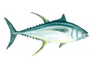 Read more about the article The Complete Guide to Yellowfin Tuna Fishing in Stuart, Florida