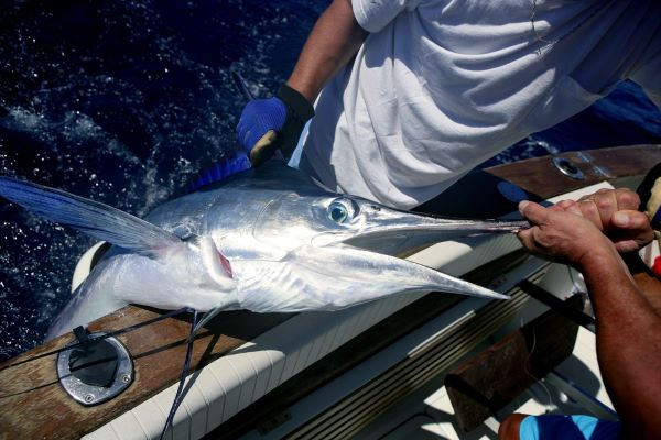 Read more about the article The Ultimate Guide to Blue Marlin Fishing