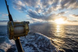 Read more about the article Tips for Choosing the Best Fishing Rod in Stuart, Florida