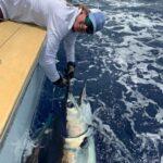 Caught a Blue Marlin