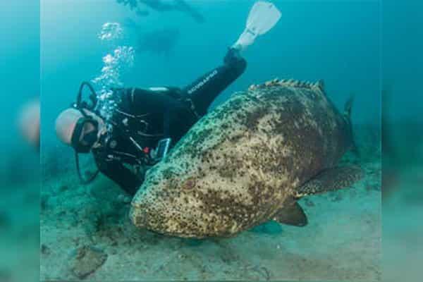 Scuba Diving at Bathtub Hutch Beach
